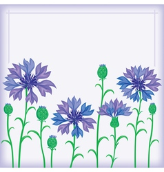 Flower border of cornflowers vector