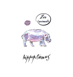 the common hippopotamus in watercolor vector image vector image