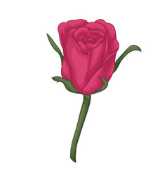 Beautiful red rose with effect watercolor vector