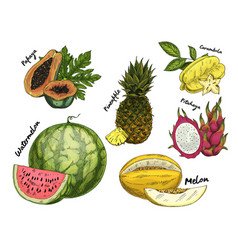 set isolated sketch tropical fruits vector image