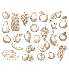 sketch fruits isolated icons exotic garden vector image