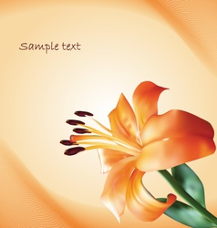 background with lily vector image vector image