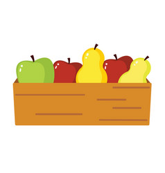 apple and pear harvest isolated vector image