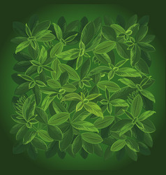 background small leaves top view vector image