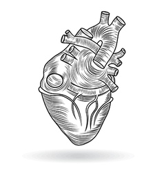button or icon of a human heart vector image