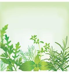 Frame fresh herbs vector