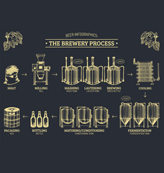 beer infographics with of vector image