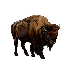Bison buffalo from a splash watercolor vector