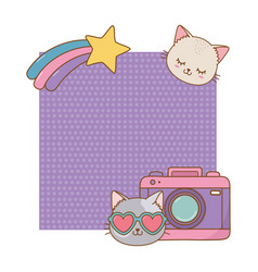 cat and photographic camera frame vector image