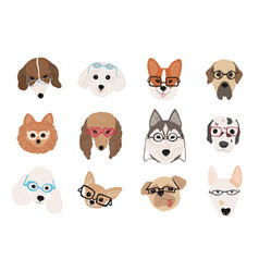 collection cute dogs various breeds wearing vector image