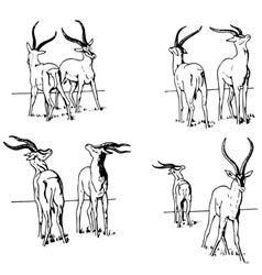 Gazelle battle vector