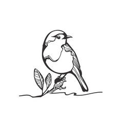 Robin sketch black and white vector