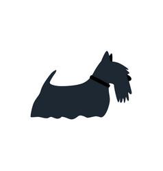 scottish terrier dog flat on white vector image