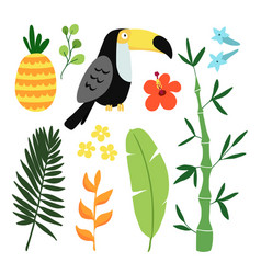 Summer tropical graphic elements toucan bird vector
