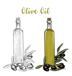 olive oil branch and glassware bottle with cork vector image