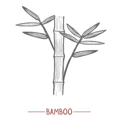 bamboo in hand-drawn style vector image