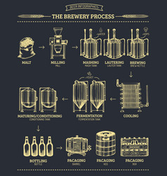 Beer infographics with of vector