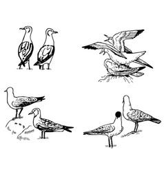 Bird larus vector
