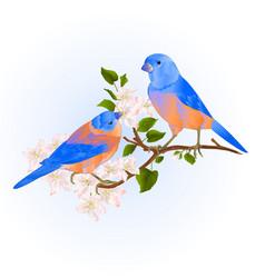 Bluebirds thrush small songbirdons on an apple vector