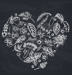 Heart floral design with chalk angelica basil vector