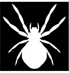 white spider vector image