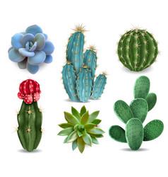 cactus succulent realistic set vector image