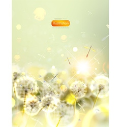 Dandelion Flower Background vector
