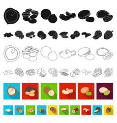 different kinds of nuts flat icons in set vector image