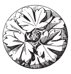 early gothic boss rosette is made of three vector image