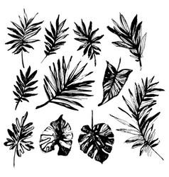 grunge tropical leaf silhouette elements set vector image