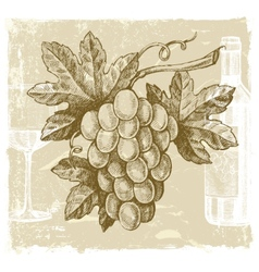 hand drawn grape vector image