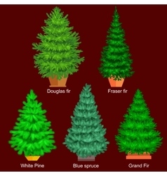 Set of potted christmas tree like fir or vector