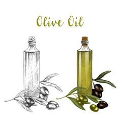 sketched branch of olive oil in glass bottle vector image
