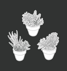 house plant in pot set vector image