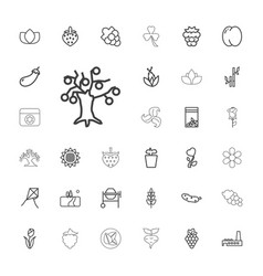 33 plant icons vector