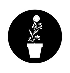 Cute garden flower in pot vector