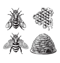 set bee wasp honeycombs hive vintage drawing vector image
