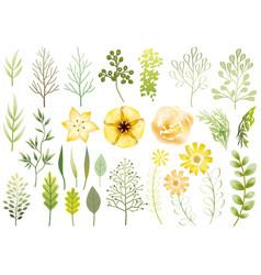 set botanical elements vector image