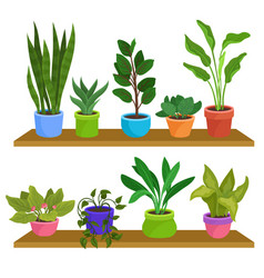 two wooden shelves with various houseplants vector image