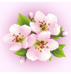 Japanese cherry tree blossoming branch of sakura vector image vector image