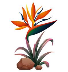 Bird paradise flower on white background vector