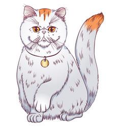 Exotic shorthair cat vector