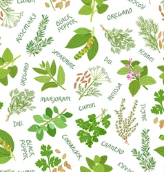 Herbs and spices seamless pattern on white vector