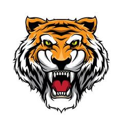 roaring tiger tiger head mascot vector image
