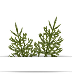 symbol of the new year an image of two green fir vector image
