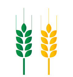 green and golden wheat vector image
