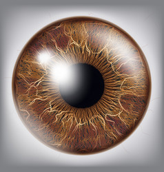 Human eye iris 3d realistic eyeball vector