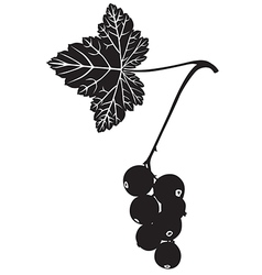 currant silhouette vector image