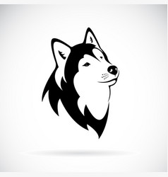dog siberian husky on white background dog vector image