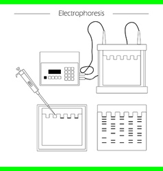 Electrophoresis outline icon vector image